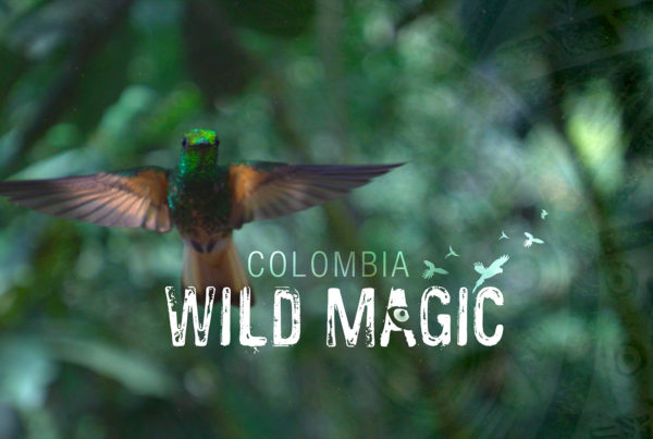 Colombia: Wild Magic ©Holey & Moley Ltd