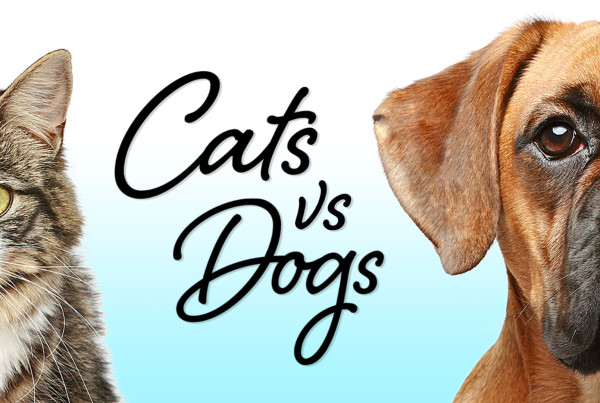 Cats v Dogs Which is Best? ©Holey&Moley 2016