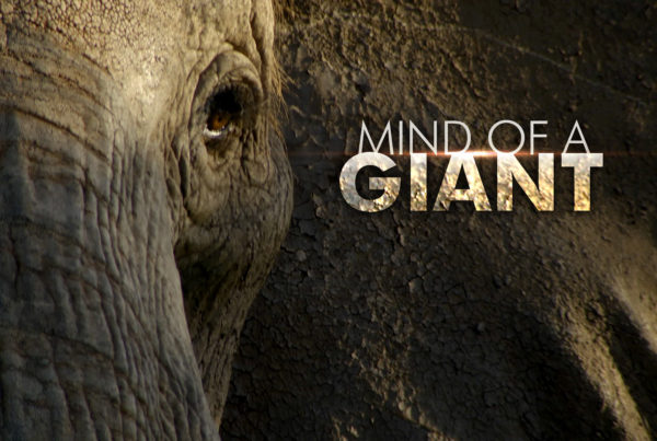 Mind of a Giant © Holey & Moley Ltd