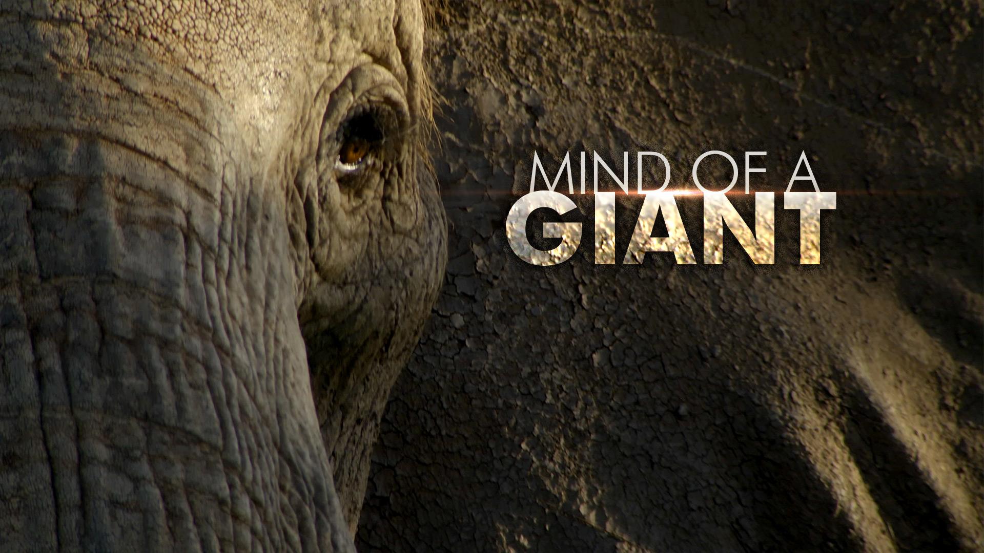 Mind of a Giant © Holey & Moley Ltd